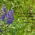 Alaskan Lupine Heaven by Diane E Berry