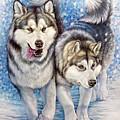 Alaskan Malamute by Anne Koivumaki - Fine Art Anne