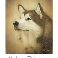 Alaskan Malamute Poster by Tim Wemple
