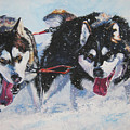 Alaskan Malamute Strong And Steady by Lee Ann Shepard