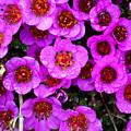 Alaskan Wild Flowers by Anthony Jones