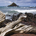 Alau Islet, Drift Wood by Ron Dahlquist - Printscapes