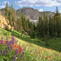 Albion Basin Wasatch Mountains Utah by Utah Images