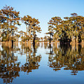 Atchafalaya Swamp 3 Louisiana by Lawrence S Richardson Jr
