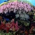 Alcyonarian Coral - Fiji by Dave Fleetham - Printscapes
