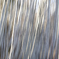 Alder Trees Abstract by Peggy Collins
