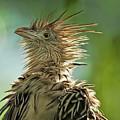 Alert Bird by LOsorio Photography