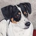 Alert Little Rat Terrier  by Sherry Goeben