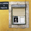 Alfama Dog In Window - Calcadinha Da Figueira  by Menega Sabidussi