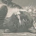 Alfie by Debbie Deboo