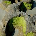 Alge On Beach Rock Formation by David Campione