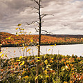 Algonquin Autumn by Phill Doherty