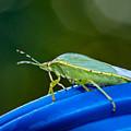 Alice The Stink Bug 2 by Steve Harrington