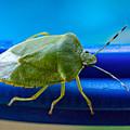 Alice The Stink Bug 3 by Steve Harrington