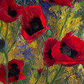 Alicias Poppies by Colleen Taylor