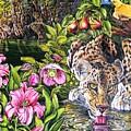 Alidas Garden by Donald Dean