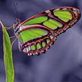 Alien Butterfly by Jean Noren