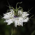 Alien Flower by Jean Booth