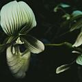 Alien Flower by Yuka Ogava