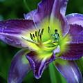 Alien On Flower by Ben Upham III