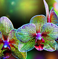 Alien Orchids by Bill Tiepelman