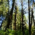 Alien Trees by Gallery Of Hope