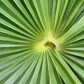 All Green by Teresa Zieba
