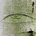 All-seeing Eye Of God On A Tree Bark by Peter Hermes Furian