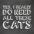 All These Cats by Nancy Ingersoll