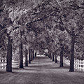 Allee Way Bw by Steve Gadomski