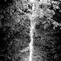 Allee_des_arbres by Sophia Pagan