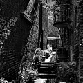 Alley Garden by David Patterson