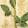 Allie's Rose Sonata 2 by Debbie DeWitt