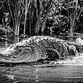 Alligator Bags Of Port Aransas by Debra Martz