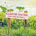 Alligator Caution by Teresa Blanton