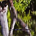 Alligator by Michael Whitaker