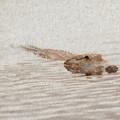 Alligator Waiting In The Water by Dan Friend