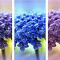 Allium Triptych by Jessica Jenney