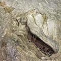 Camarasaurus by David Millenheft