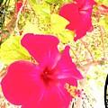 Almeria Flowers by Alicia Guerrero