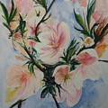 Almond Blossom by Lizzy Forrester