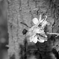 Almond Orchard 2 by Marta Robin Gaughen
