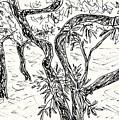 Almond Trees In Lanjaron by Chani Demuijlder