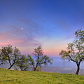 Almonds And Moon by Guido Montanes Castillo
