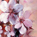 Almonds Blossom  12 by Roman Ben