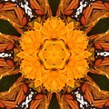 Almost Butterflies Kaleidoscope by Pamela Picassito