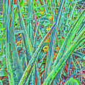 Aloe And Lantana by Teresa Prevey