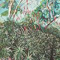 Aloe Garden Vumba by Valentine Magutsa