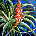Aloe In Bloom by Patricia Rachidi
