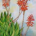 Aloe Nobiles by Elena Roche